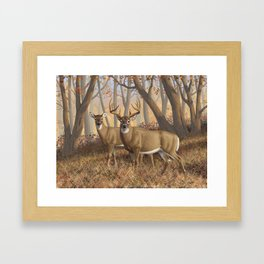 Whitetail Deer Trophy Buck and Doe in Autumn Framed Art Print