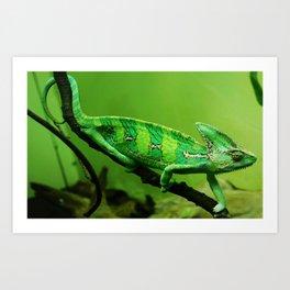 Zoo Lizard Art Print