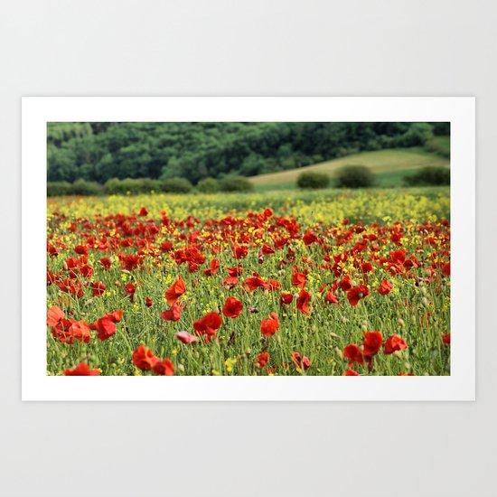 Poppies, Poppies, Poppies Art Print