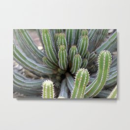 Nature on form Cactus photograhy no.3 Metal Print