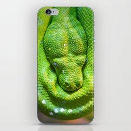Green tree python iPhone Skin