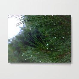 pine mist Metal Print