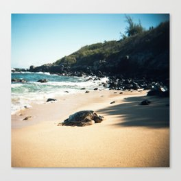Hawaiian Sea Turtle Laying on the Beach Canvas Print
