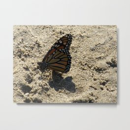 Monarch on the Beach Metal Print