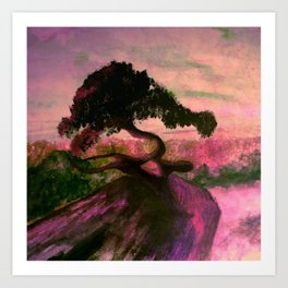 Cypress in Carmel California Art Print