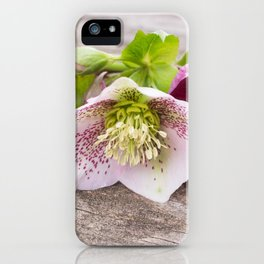 Gifts from the Garden iPhone Case