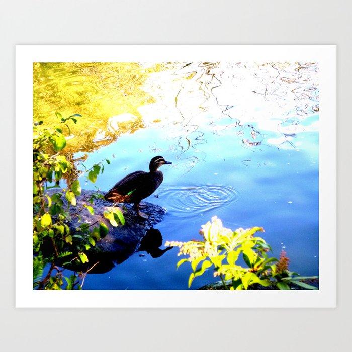 Duck Pond - Color Art Print