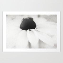 Ethereal Black-eyed Susan BW Art Print