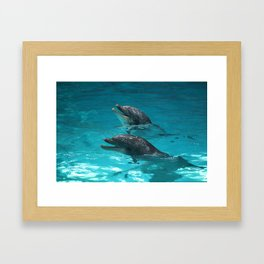 Doplhin Close up Framed Art Print