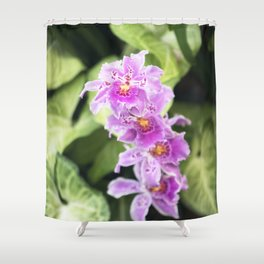 Longwood Gardens Orchid Extravaganza 61 Shower Curtain