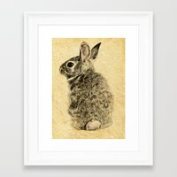 rabbit Framed Art Prints featuring Rabbit by Anna Shell
