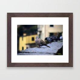 My Italian Bird Friend Framed Art Print