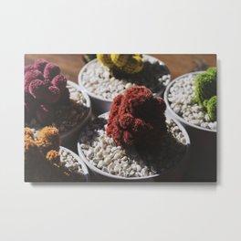 Close up of colorful cacti Metal Print