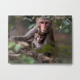 Monkeys of the Taj Metal Print