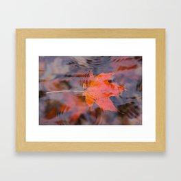 Leaf in stream Framed Art Print