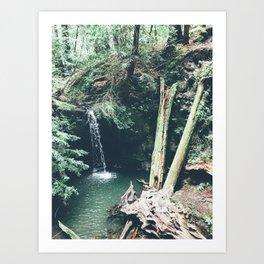Redwood Waterfall Art Print