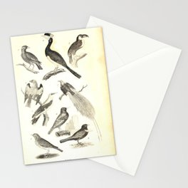 002 Malabar Horn bill Brazilian Tucan Gracle Roller Golden Oriole Starling Bird of Paradise Throstle Ring Ouzel9 Stationery Cards