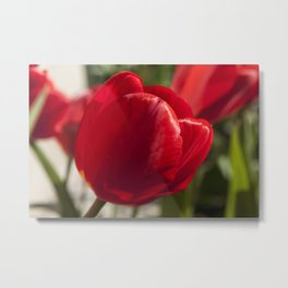 Red Tulip Photography Print Metal Print