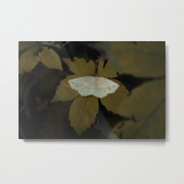Autumn Moth Metal Print