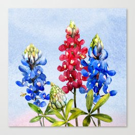 Bluebonnets 2 Canvas Print