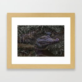 Caiman at Water with Menacing LookPrint Framed Art Print