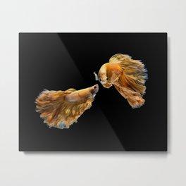 Multi-color betta fish, siamese fighting fish  Metal Print