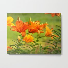 Orange Light Metal Print