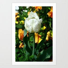 Tulip after the Rain Art Print