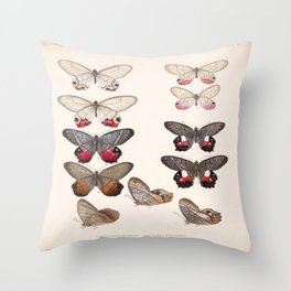 Moths And Butterfly Vintage Scientific Hand Drawn Insect Anatomy Biological Illustration Throw Pillow