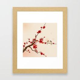 Oriental plum blossom in spring 007 Framed Art Print