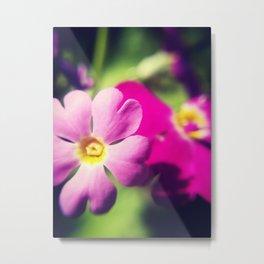 Pink Primula Metal Print