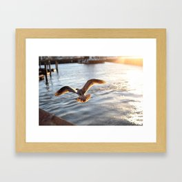 Bird in Flight Framed Art Print