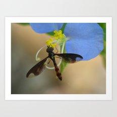 fly on wildflower Art Print