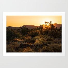 Desert Sunset Behind a Joshua Tree Art Print