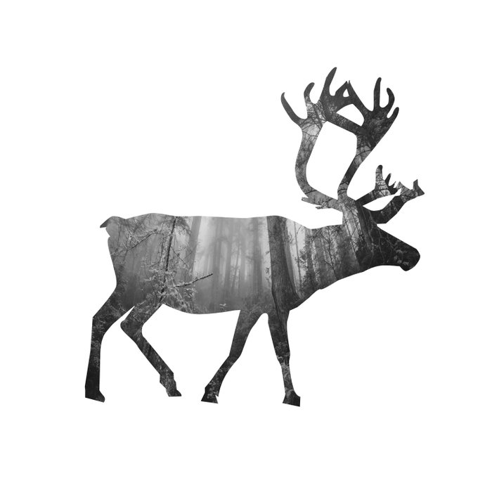 Moose Silhouette   Forest Photography Comforters
