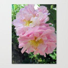 Celestial Antique Rose Canvas Print