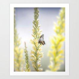 """Butterfly and Flowering Shindagger"" by Murray Bolesta! Art Print"
