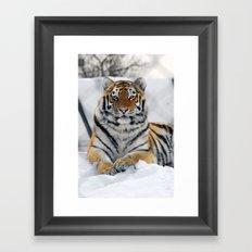 Tiger in snow Framed Art Print