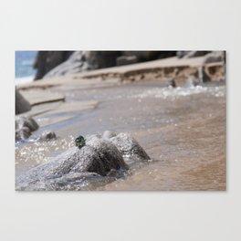 Adventures at the beach Canvas Print