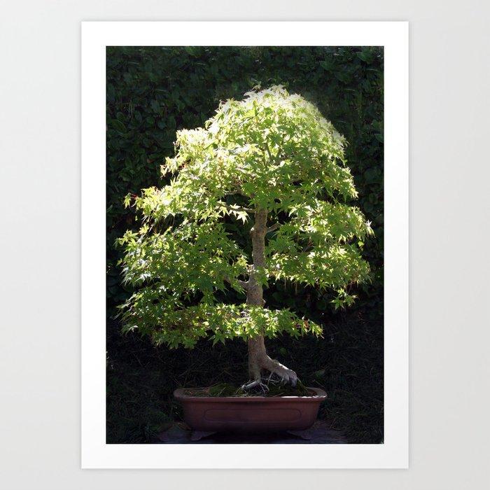 Miniature Tree Art Print