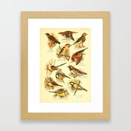 William Playne Pycraft - A Book of Birds (1908) - Plate 26: Larks, Tits and Buntings Framed Art Print