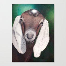 Waylon, a Young Goat Canvas Print