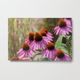 Cone Flowers Metal Print