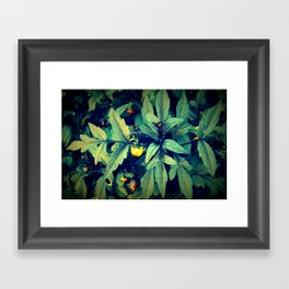 Flower Bud among leaves  Framed Art Print