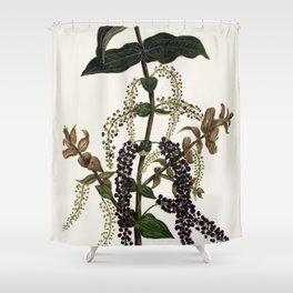 Antique plant Tutu drawn by Sarah Featon (1848-1927) Shower Curtain