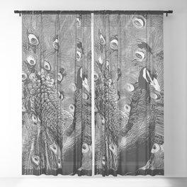 Bird Models: Pretty Peacocks 02-03 Sheer Curtain
