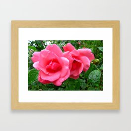roses after rain Framed Art Print
