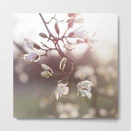 Magnolia Golden Hour Metal Print
