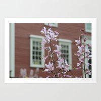 Blossoms & Old Buildings Art Print