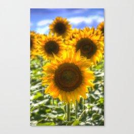 Sunflowers Summer Days Canvas Print